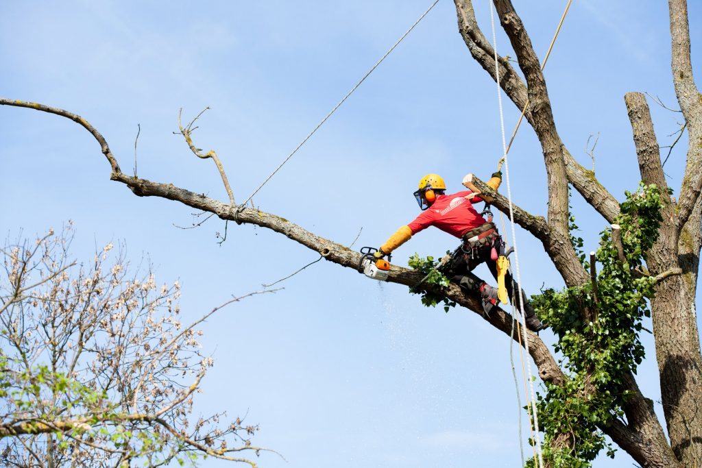 FIREWISE arborist cutting a tree with a chainsaw- Firewise tree service in Prescott Arizona